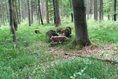 2016-05-14 Klosterturnier Willebadessen - 4 von 43