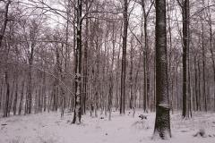 Ein Wildschein im Schnee