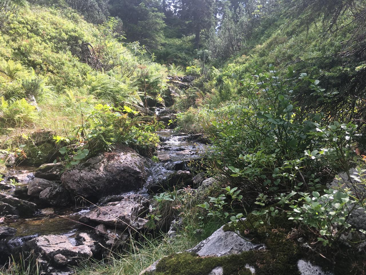 2017-08 Planneralm Landschaft - 26