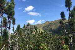 2017-08 Planneralm Landschaft - 17