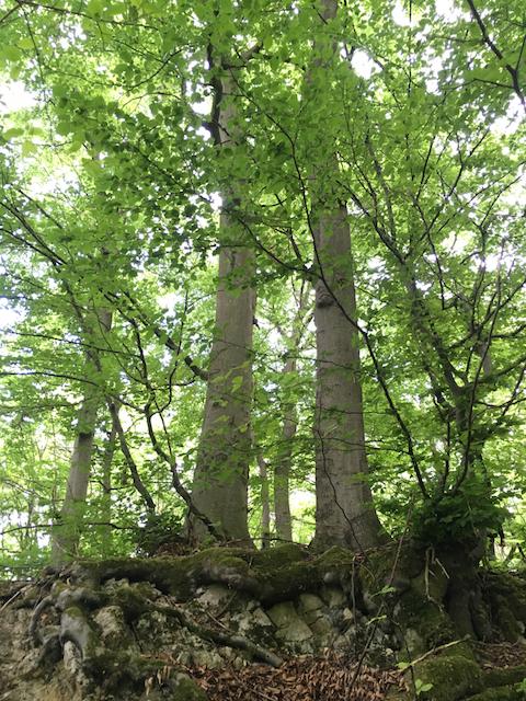 2018-05-19_Klosterturnier - 17