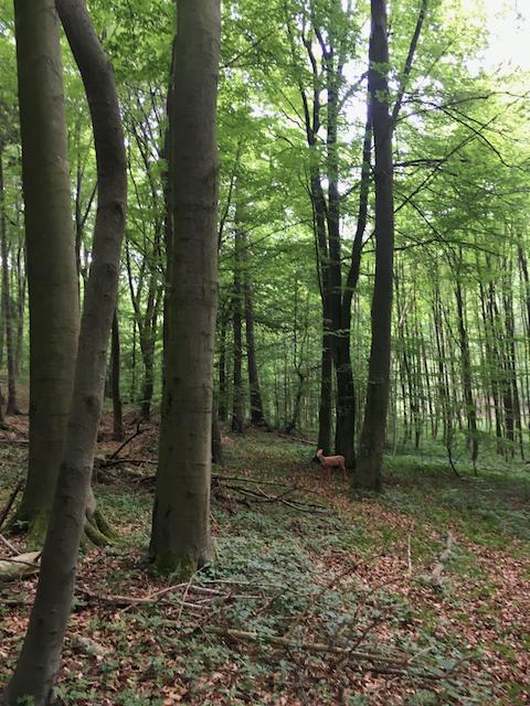 2018-05-19_Klosterturnier - 18