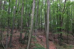 2018-05-19_Klosterturnier - 20