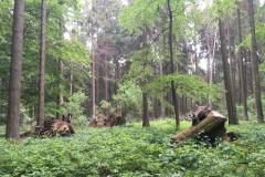 2018-05-19_Klosterturnier - 9