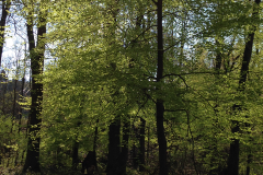 Parcour Willebadessen 2016 - 7 von 14